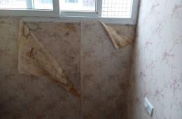 屋里壁纸发霉都掉了 要整体做个防潮