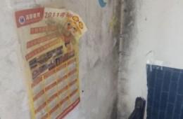 东丽区天鸿公寓数间墙壁和厕所漏水