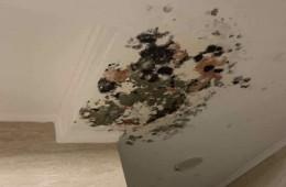 石家庄中电信息大厦 走廊天花板渗水,天花板发霉