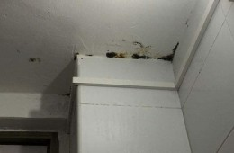 吉林外国语大学教师公寓22间室内天花板渗水